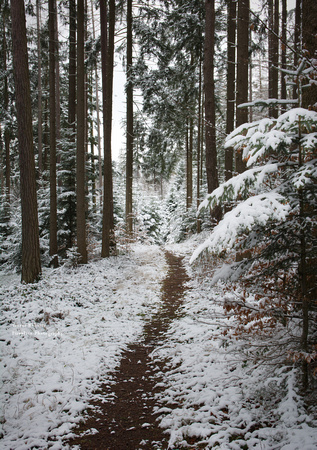 Winter in Pfarrerwald 8