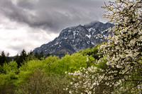 Blossom in front of the Traunstein 2015