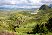 Lone tree looking over the Quiraing national park