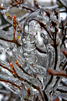 Ice encapsulating everything