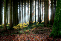 Enchanting forest light