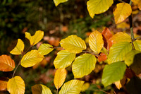 Autumn leaves - detail
