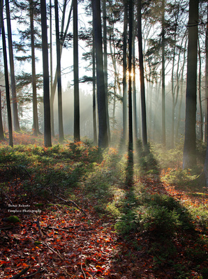 The last warming rays light up the forest