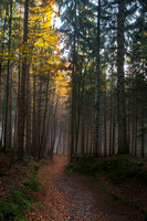 A swath of golden light over the forest path