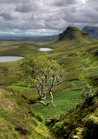 The famous tree in Quiraing-Portrait