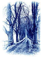 Horse Chestnut Tree alley - in Quad Blue Tones