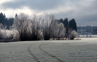 Frosty fields with the sun catching the trees